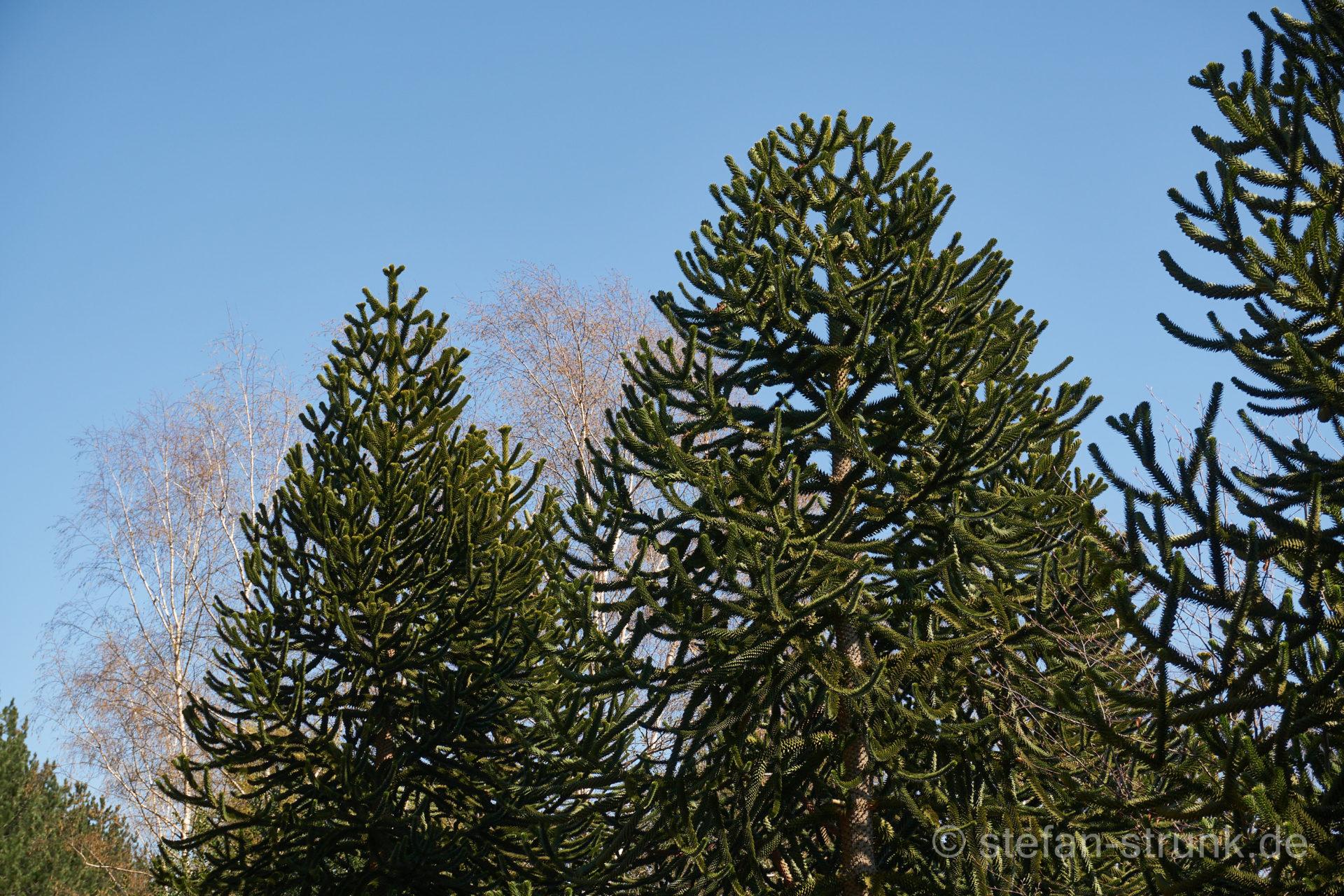Arboretum Burgholz